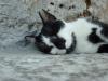 Spící koučkoun