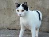 Bílý kočkoun